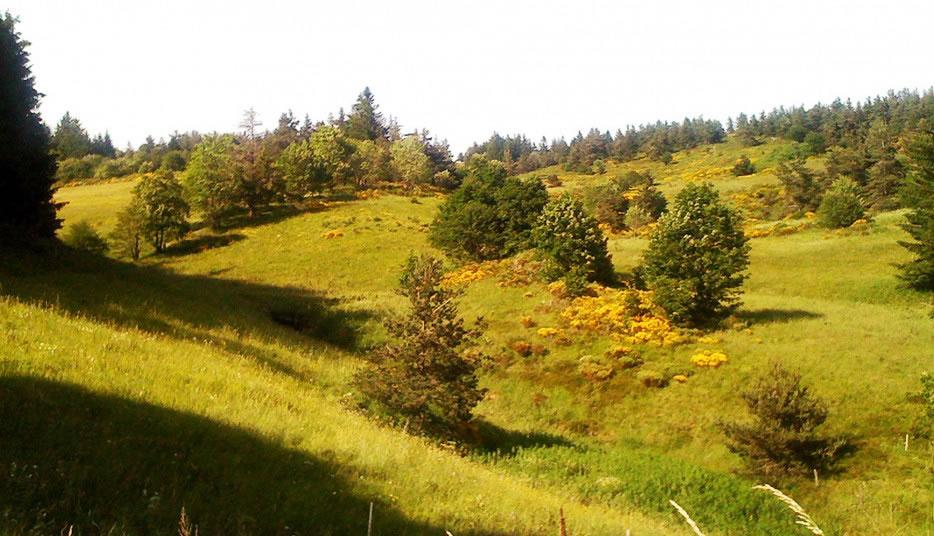 le paysage du plateau